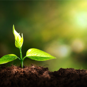Sowing Seeds…Cultivating the Good Stuff